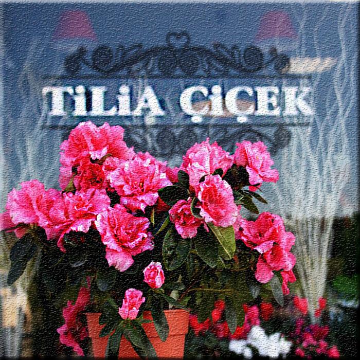 tilia çiçekçilik